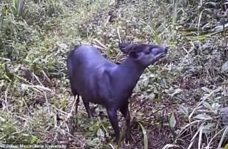 Настырным ученым удалось заснять еще одно очень редкое животное на горе Килиманджаро