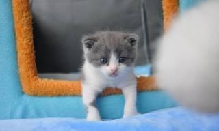 Китайские ученые впервые… клонировали кота