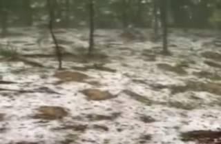 Закарпатье внезапно занесло снегом и градом