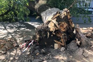 В центре Киева гигантское дерево рухнуло на женщину: появилось видео падения