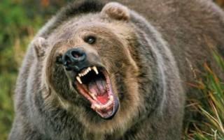 Парочка американских пенсионеров эпично отбилась от медведицы