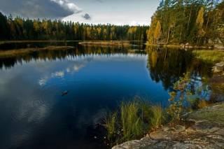 Украина попала в топ стран для путешествий по дикой природе