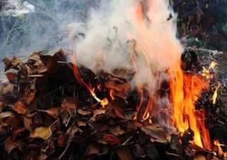 Трагедия под Киевом: пожилые мужчина и женщина погибли, сжигая траву