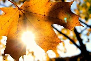 Осень продолжит радовать киевлян погодой и на следующей неделе