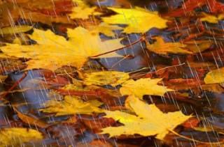 Со следующей недели в Украину придет настоящая осень