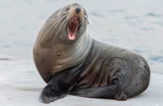В Австралии тюлень помог… поймать наркоторговцев