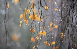 На Киев скоро обрушится холодный дождь