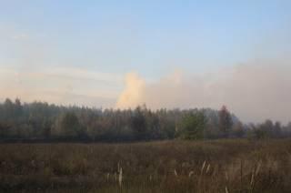 В Полтавской области выгорел лес