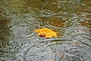 В Киеве на несколько дней зарядят дожди