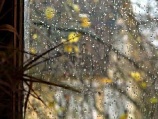 В ближайшие часы в Киеве надолго зарядит дождь
