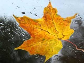 Погода на неделю: дожди и резкое похолодание