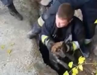 В Днепре эпично спасли собаку