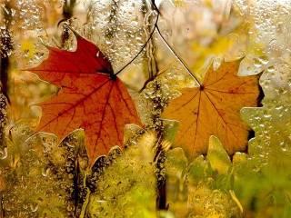 Украинцы могут насладиться последним теплом осени. Уже завтра значительно похолодает