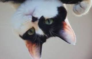 В Днепре из окна квартиры… выпала голая женщина с котом