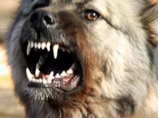 В Полтаве спасли женщину, которую буквально разрывала стая собак
