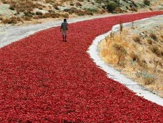 Ученые поведали об удивительном свойстве красного перца чили