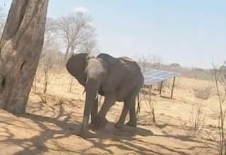 В одной из африканских стран начался мор слонов