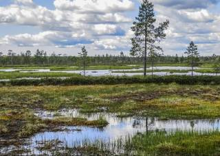 Ученые заявили об аномальных изменениях экосистемы Европы