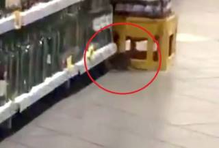 В киевском супермаркете по торговому залу бегала крыса. Работники признались, что у них их «целая семья»