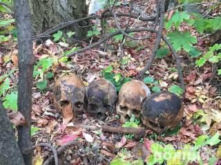 Суровый житель Николаева принес бывшей возлюбленной череп из склепа, в котором организовал ночлежку