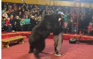 В российском цирке медведь внезапно «вышел из себя»: появилось видео инцидента