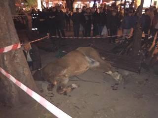 В центре Львова испуганная лошадь снесла скамейку со школьницей. Ее пришлось усыпить