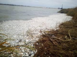 2 млн рыб погибли в ходе добычи песка в Херсонской области