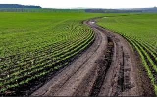 Названа приблизительная цена одного гектара украинской земли
