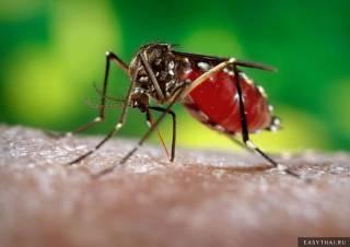 Лихорадка денге спровоцировала массовый мор людей в Гондурасе