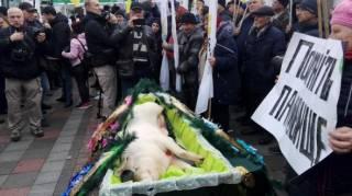 Протестующие подложили депутатам свинью под Верховной Радой
