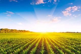 Колумнист «Фразы» предсказал весь ужас рынка земли еще два года назад