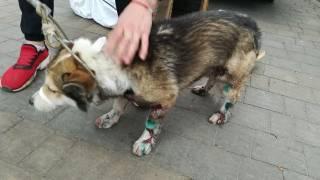 В Хмельницком жлоб-чиновник поиздевался над собакой. Теперь ему светит срок