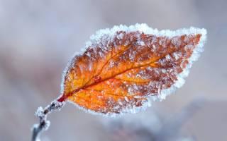 Синоптики предупредили украинцев, что грядущие выходные будут морозными
