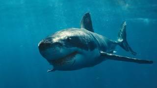 Найдено долгожданное спасение от акул