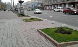 Стало известно, куда подевались каштаны с главной улицы Киева