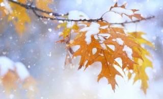Синоптики рассказали, когда в Украине пойдет снег