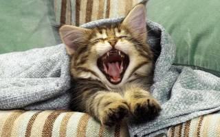 В селе под Винницей кот задушил 9-месячного младенца