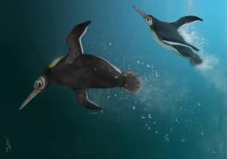 Ученые выяснили о пингвинах кое-что неожиданное