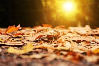 На следующей неделе в Украину «вернется» осень