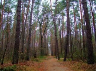 В киевском лесу нашли труп подростка