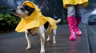 Синоптики рассказали, какой будет погода на выходных