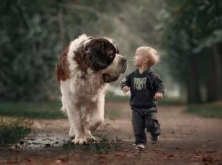Ученые поведали о неоценимой пользе общения детей с собаками