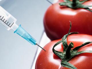 В NASA заинтересовались помидорами, которые растут как виноград