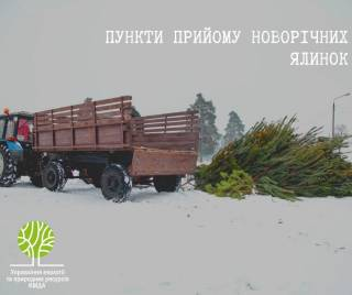 Киевлянам наглядно показали, куда следует сдавать новогодние ели