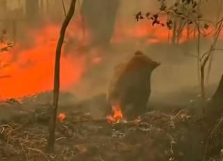 Сотни миллионов животных: В Австралии озвучили жуткие последствия пожаров