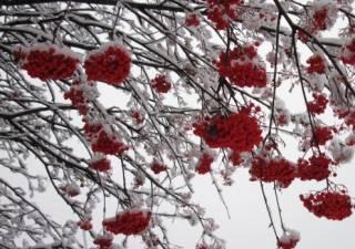 На следующей неделе в Украине внезапно потеплеет