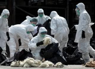 Неопознанный китайский вирус вызвал панику планетарного масштаба