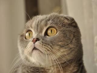 Ученые выяснили о кошках кое-что ужасающее (18+)