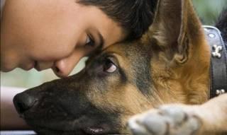 Холистики: советы по системе здорового питания собаки