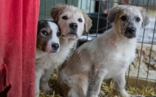 На Днепропетровщине живодер в подъезде многоэтажки перерезал шеи собакам